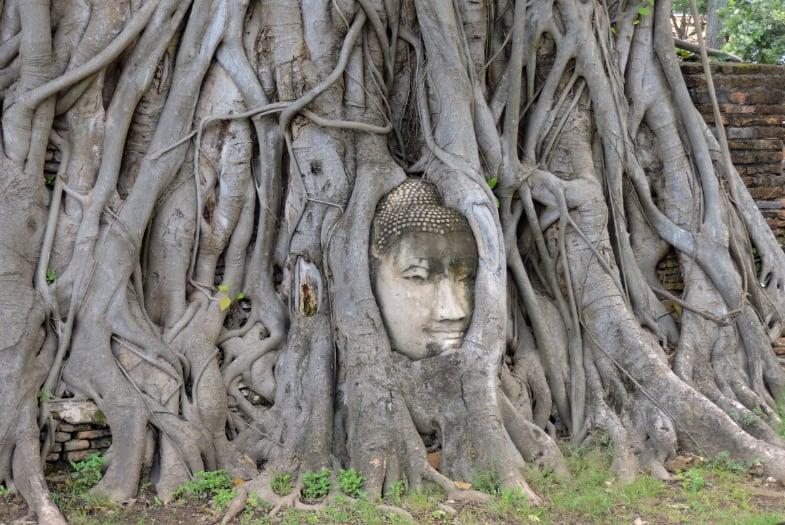 Cabeza de buda en el templo Wat Maha That