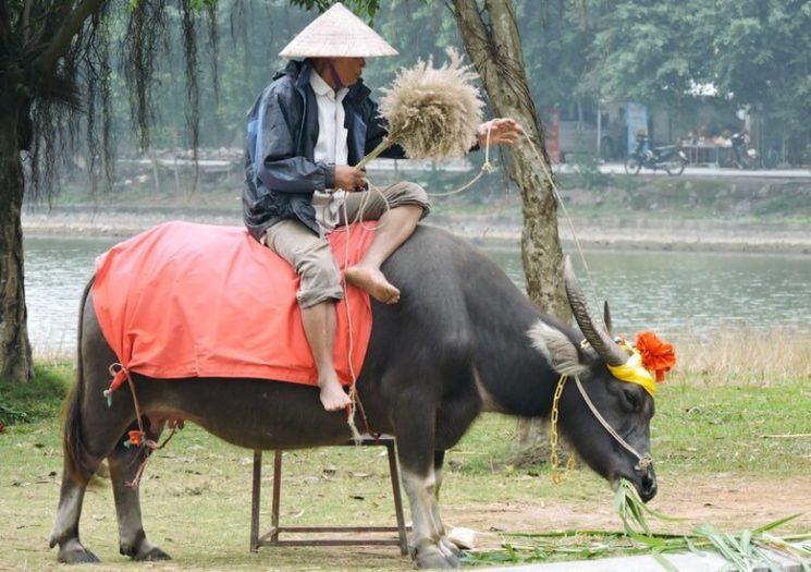 Granjero en Hoa Lu