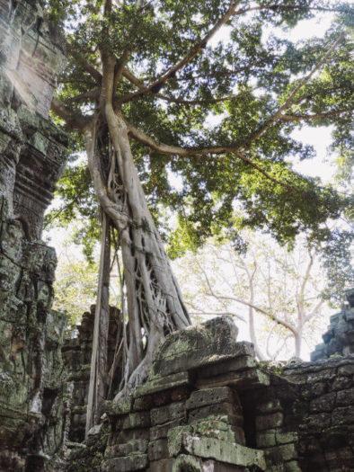 Ruinas Ta Prohm