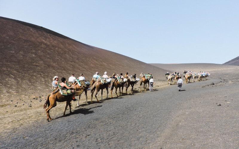 Paseo en camellos por el timanfaya