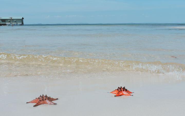 Estrellas de mar en Star-fish Beach